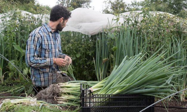 Lokale Gemüseproduktion